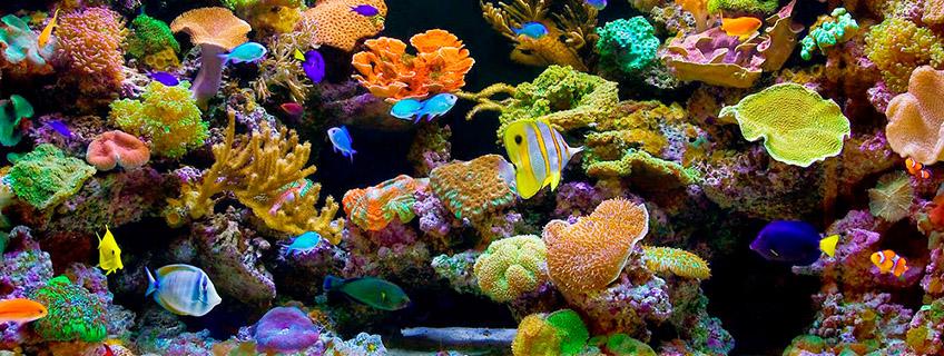 Разнообразие морских аквариумов