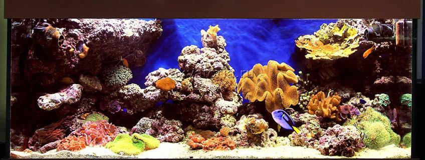Дизайн морского аквариума