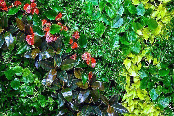 Виды разных растений для фитостен