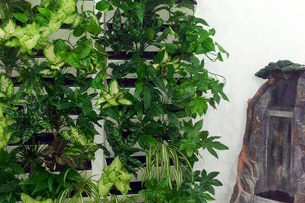 Вьющиеся растения фитостены