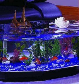 Морской акваруим в виде предмета мебели