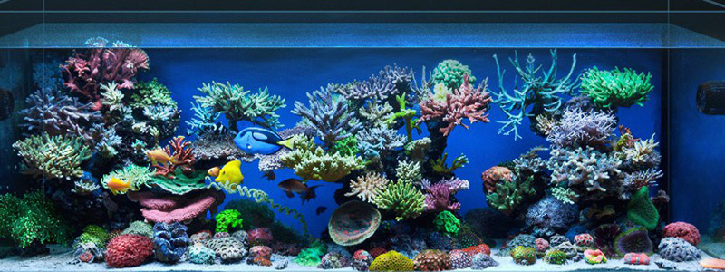 Заказ морского аквариума в Украине