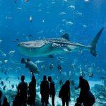 Аквариум в Атланте для осмотра туристов