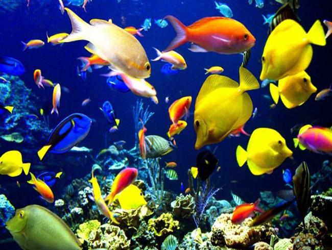 Наполнение для аквариума лучше выбрать яркое