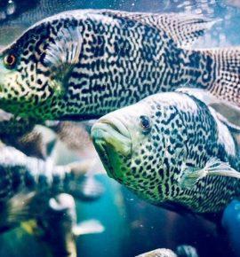 Морские аквариумы в Киеве с наполнением
