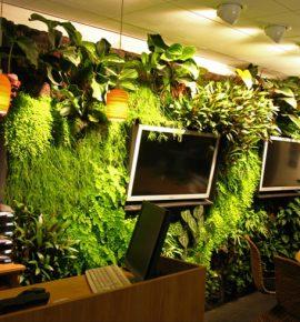 Вертикальные сады в квартирах и офисах