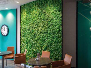 Мох для зеленой стены в интерьере