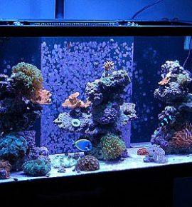 Большие аквариумы на заказ