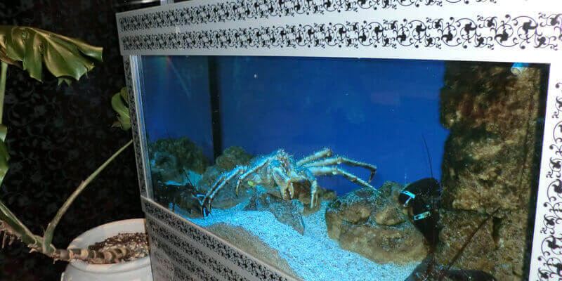 Продажа морепродуктов из акваруима в ресторане