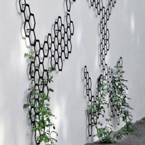 Плетущиеся растения на решетке