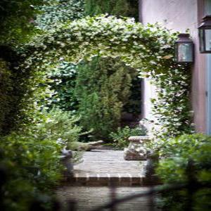 Вьющиеся растения на арке