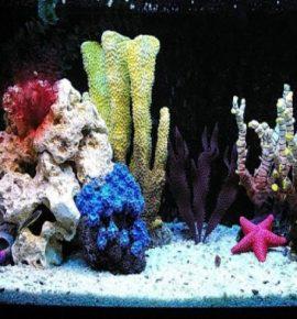 Наполнение аквариума в стиле псевдоморе