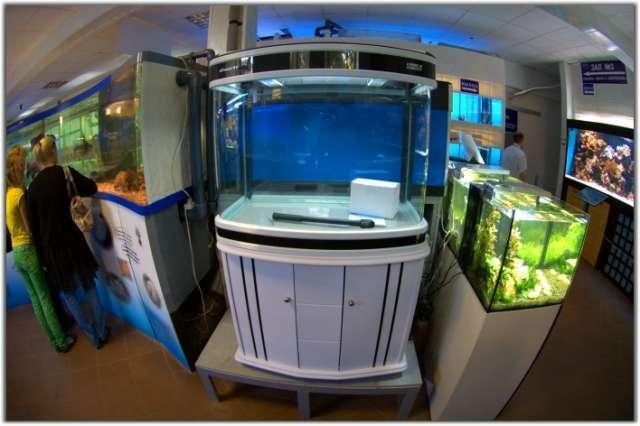 Купить морскую рыбу из аквариума в кафе