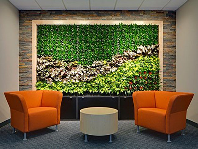 Зеленая стена из растений в Украине