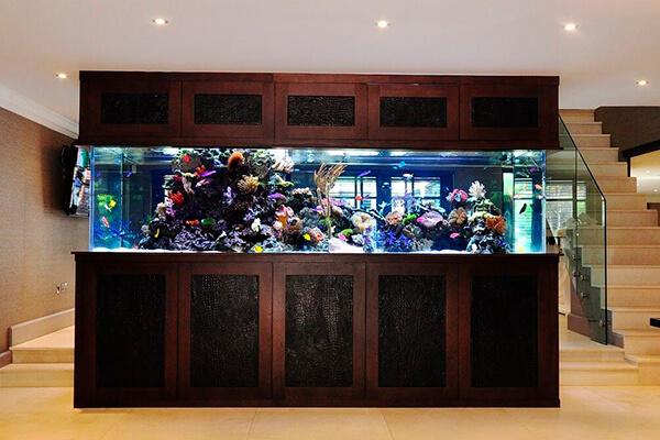 Аквариум с рыбами для уюта