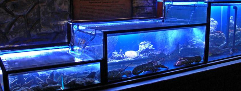 Продажа аквариумов для морской и пресноводной рыбы