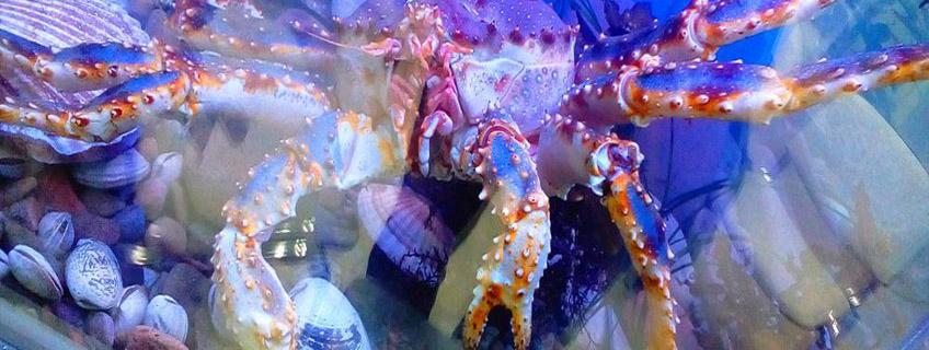 Торговый аквариум для элитного ресторана